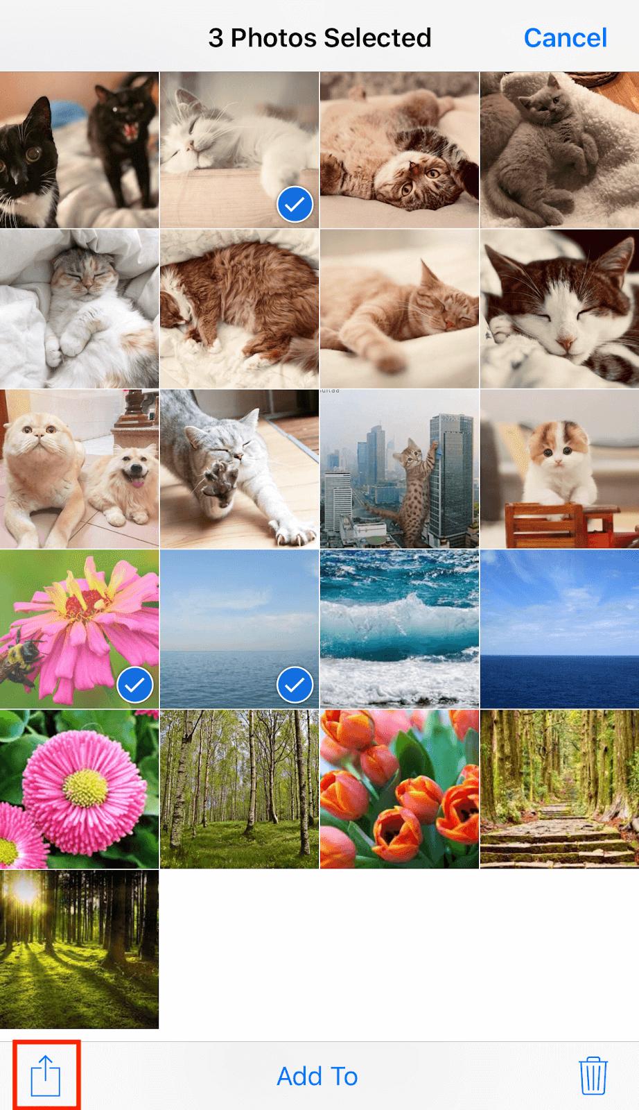 convert multiple jpg to pdf ipad